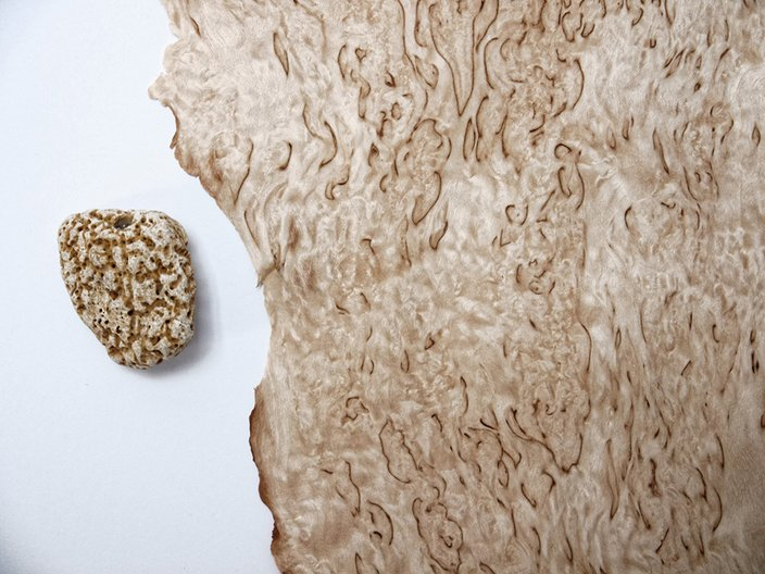 Fossils by Anna Bera © Anna Bera
