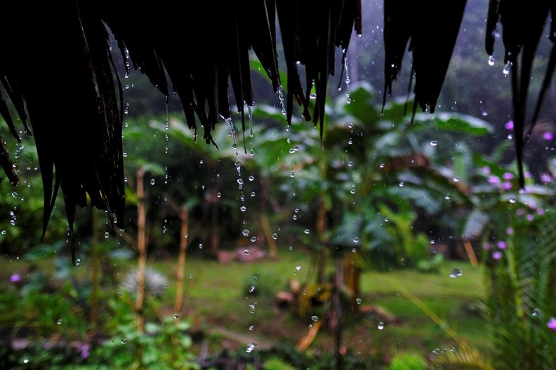 One of the Wettest Places on Earth © DOMINIC OLIVER DUDLEY
