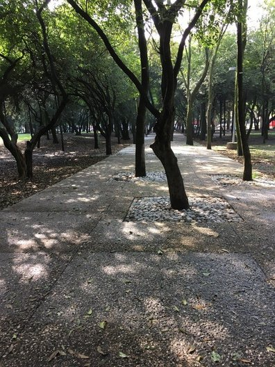 Mexico City: Bosque de Chapultepec © CAROL SINCLAIR