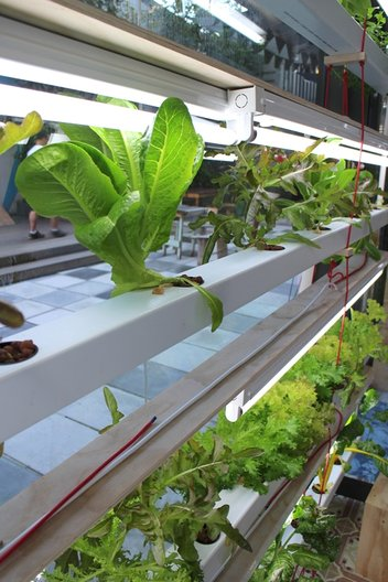 Thingkings hydroponics set up in Cape Town  ©John Nussey